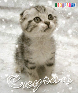 Открытки. <b>Скучаю</b>! <b>Котенок</b> под снегом картинки смайлики