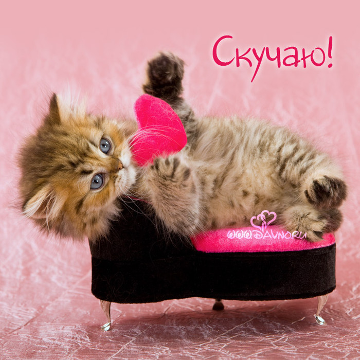 любимому котеночку картинки вечеринки