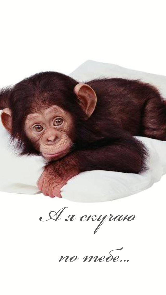 Смешные открытки с обезьянами
