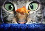 Золотая рыбка смайлики картинки