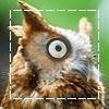 Картинка Любопытная сова анимация