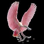Картинка Розовый фламинго анимация