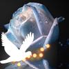 Белый голубь летит рядом с голубой розой