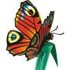 Бабочка на тонкой травинке