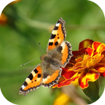 Смайлик Бабочка на гвоздике аватар