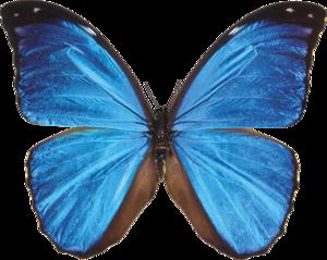 Гиф gif Сине-голубая бабочка рисунок