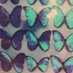 Картинка Бирюзовые бабочки анимация
