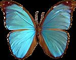 чай голубая бабочка