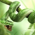 Смайлик Зеленая змея с открытой пастью обвила ветку дерева аватар