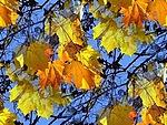 Смайлик Красота осеннего пейзажа (2) аватар