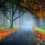 Гиф gif Туманный лес усыпан осенней листвой рисунок