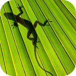 Тень ящерки на листе