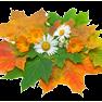 Осенние кленовые листья и ромашки