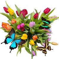 Тюльпаны с бабочками к 8 Марта картинка смайлик