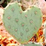 Гиф gif Кактус в виде сердечка рисунок