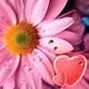 Смайлик Сердечки на ромашке аватар