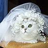Картинка Невесты бывают разные анимация