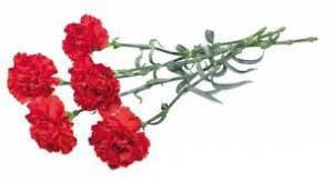 Смайлик Цветы к Дню Победы! Гвоздики (3) аватар