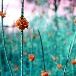 Картинка Цветочный пейзаж анимация